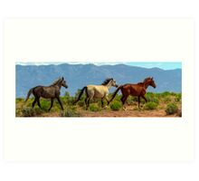 Grey, White and Chestnut Horse Panorama View Art Print