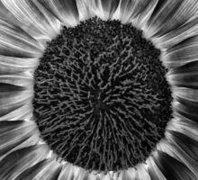 Black and White Sunflower Sticker