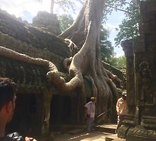 Cambodia - Angkor Wat trees at Ta Prohm by Ren Provo