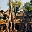 Giant tree root at Ta Promh Temple Cambodia by Martin Lawrence