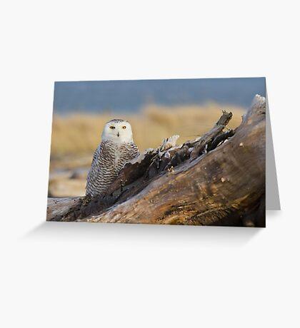 Snowy Owl in Evening Light Greeting Card