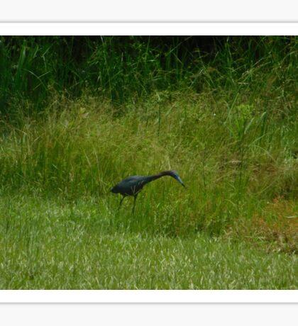 Blue Heron Hunting Sticker