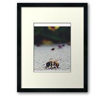 Bee Life Framed Print