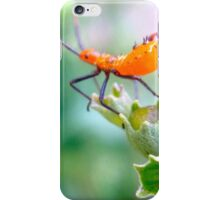 Ready to leap - assassin bug nymph iPhone Case/Skin