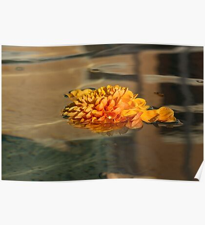 Jewel Drops - Orange Chrysanthemum Bloom Floating in a Fountain Poster
