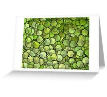 Graphic Boxes, Green (Wallpaper, Background) Greeting Card