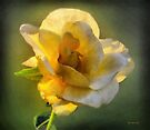 Lady of Light by RC deWinter