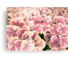 Pink Flowers are Beautiful [part 1] Canvas Print