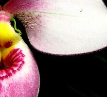 Lipstick Love - Orchid Alien Discovery by ©Ashley Edmonds Cooke