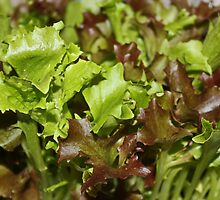 Salad Bar by AnnDixon