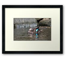 Time for a clean and a stare Framed Print