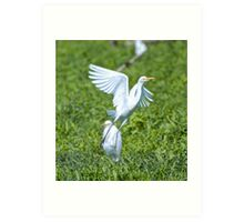 WADER ~ Cattle Egret by David Irwin Art Print