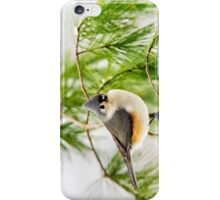 Winter Pine Bird iPhone Case/Skin