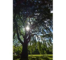 Weeping Sun Photographic Print