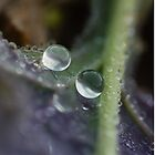 Droplet by BlossomingBeth