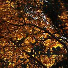 Colours Of Autumn by v-something