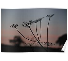 Sunrise and plant  Poster
