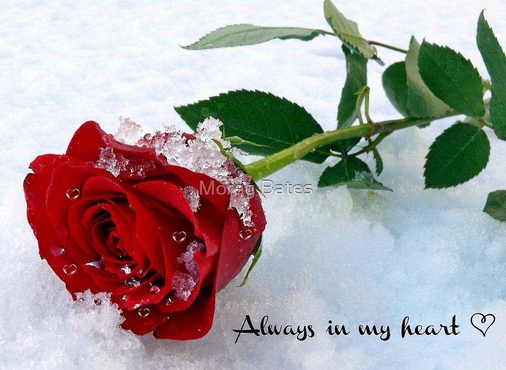 Always in my Heart by Morag Bates