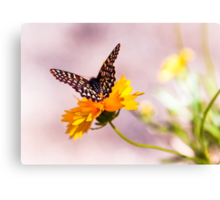 A Sip Of Coreopsis Canvas Print
