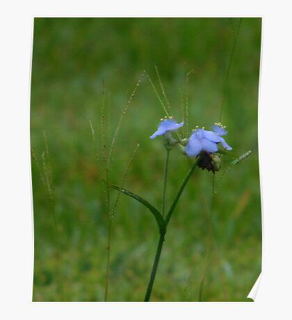 Cute Blue Flower Poster
