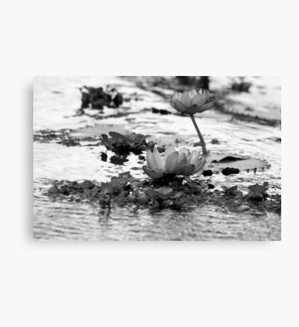 Dreamy Lotus flowers (black and white) Canvas Print