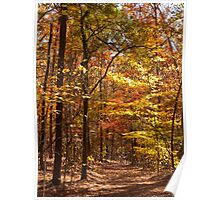 Autumn - Sweetwater Creek State Park Poster