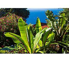 Sunny Plant/ Sunny Garden Photographic Print