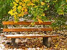 The Seasons Walk by Evelyn Laeschke