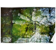 Forest Through The Trees Poster