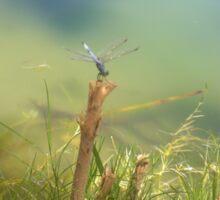 Dragonfly Serenity Sticker