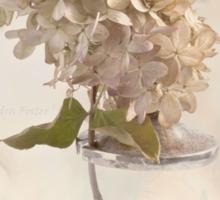 Hydrangea Softness Sticker