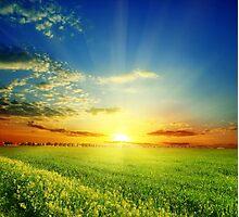 Warm Sun Photographic Print