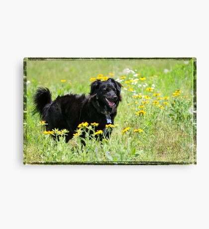 Bordercollie in meadow Canvas Print