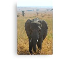 Elephant in the Serengeti Canvas Print