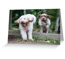 Italian Spinone Dogs in Action ~ Annabelle & Thane  Greeting Card