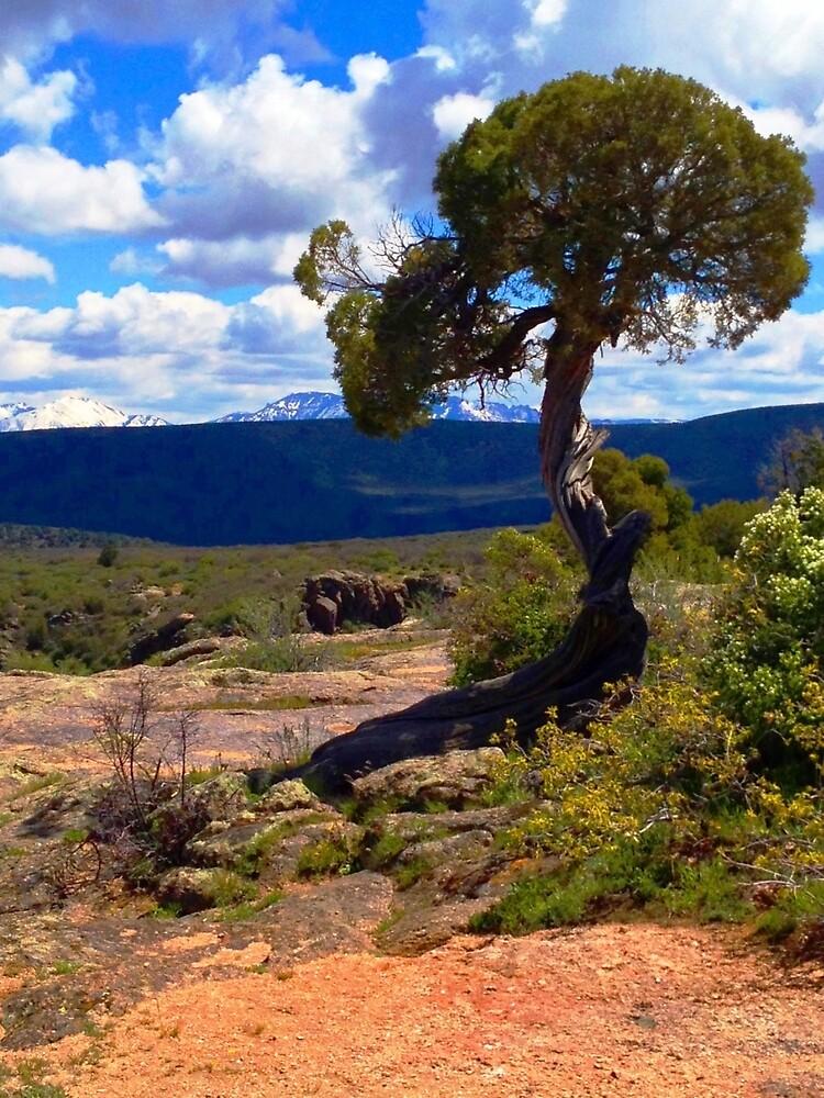 Utah Juniper at the Black Canyon by Roger Passman