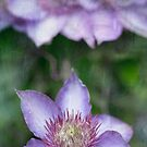 Purple Heaven by Rebecca Cozart