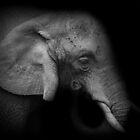Elephantness by Matt West