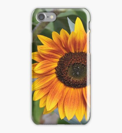 Last of the Sunflowers iPhone Case/Skin