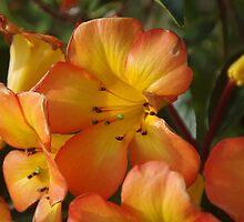 Rhododendron vareya by lezvee