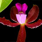 This is a Stickup! - Orchid Alien Discovery by ©Ashley Edmonds Cooke