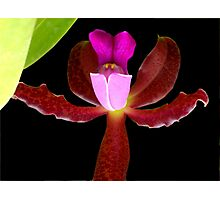This is a Stickup! - Orchid Alien Discovery Photographic Print