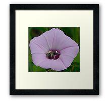 Bee in a Flower Framed Print