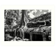 The Trees of Ta Prohm Art Print