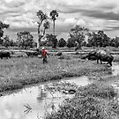 Cambodia:  Working with the Water Buffalo by Karen Willshaw