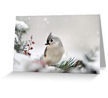 Snow White Tufted Titmouse Greeting Card