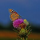 Colorful Monarch by Sandy Keeton