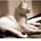 cute kitty by yvonne willemsen