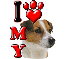 I Love My Jack Russell Photographic Print