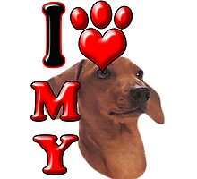 I Love My Dachshund Photographic Print